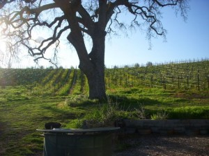 Kurt Dubost's grilling station, set amongst the vines that produce the estate's estimable wine.