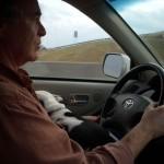 Traveling lapdog.