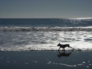 Racing the waves on Avila Beach