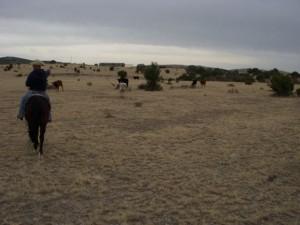 Dutch points out a Texas longhorn