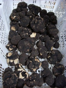 Summer black truffles--but still pretty darned tasty.
